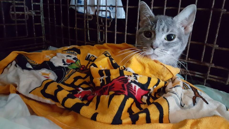 Bobbi Sue Recovering with Steelers Terrible Towel